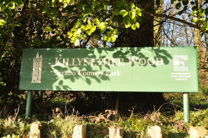 Killynether Wood