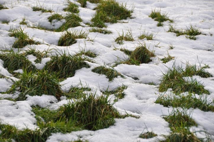 lisleen snow