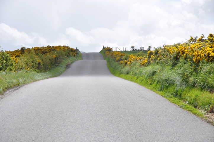Carrowreagh Road with gorse