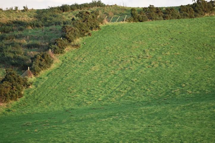 Dunlady fields 1