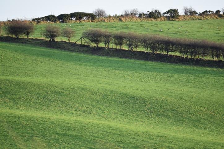 Dunlady fields 2