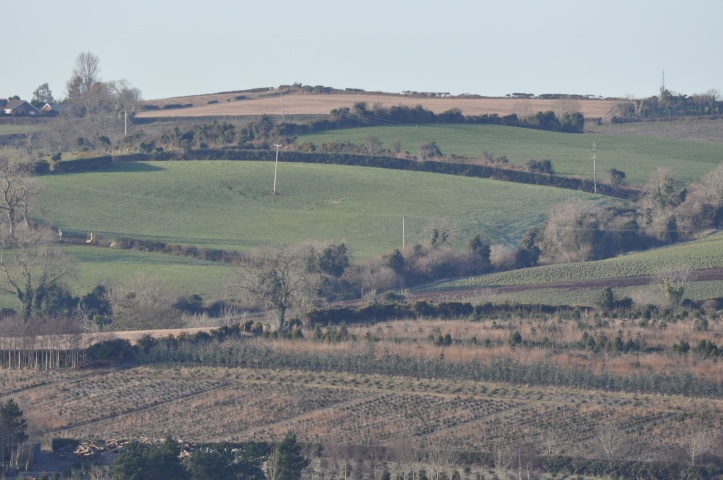 NI Farm Forestry fields