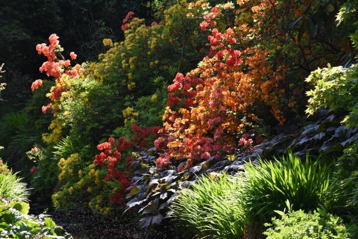 Clandeboye Estate garden