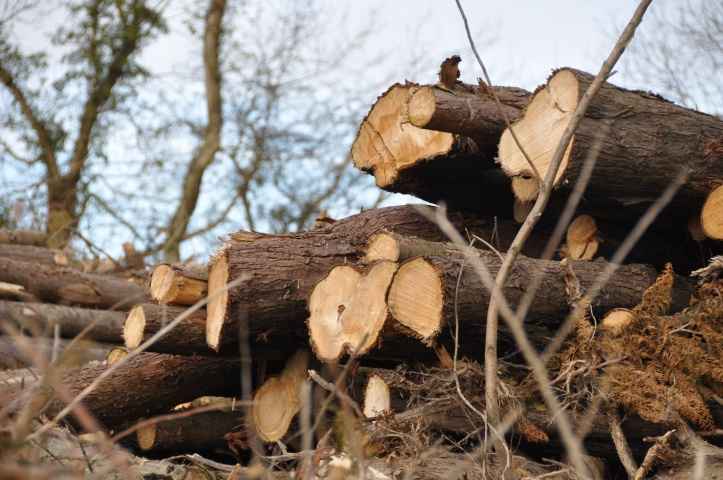 Craigantlet felled trees