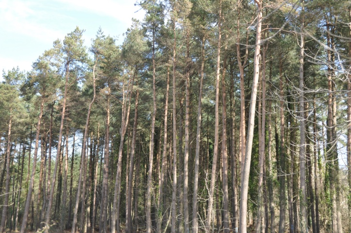 Craigantlet trees