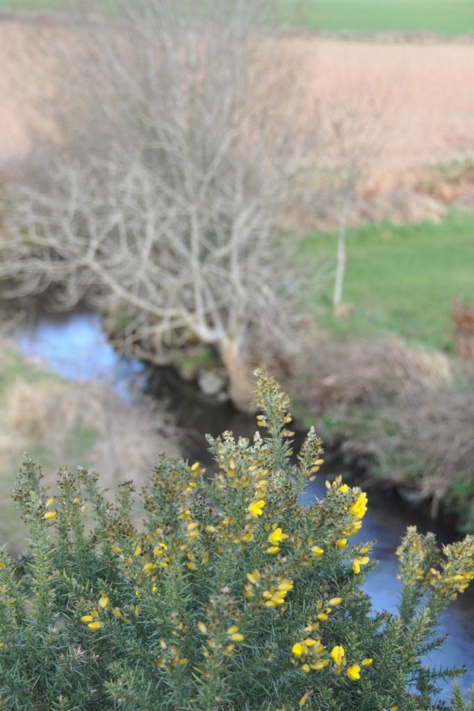 greenway gorse river 2