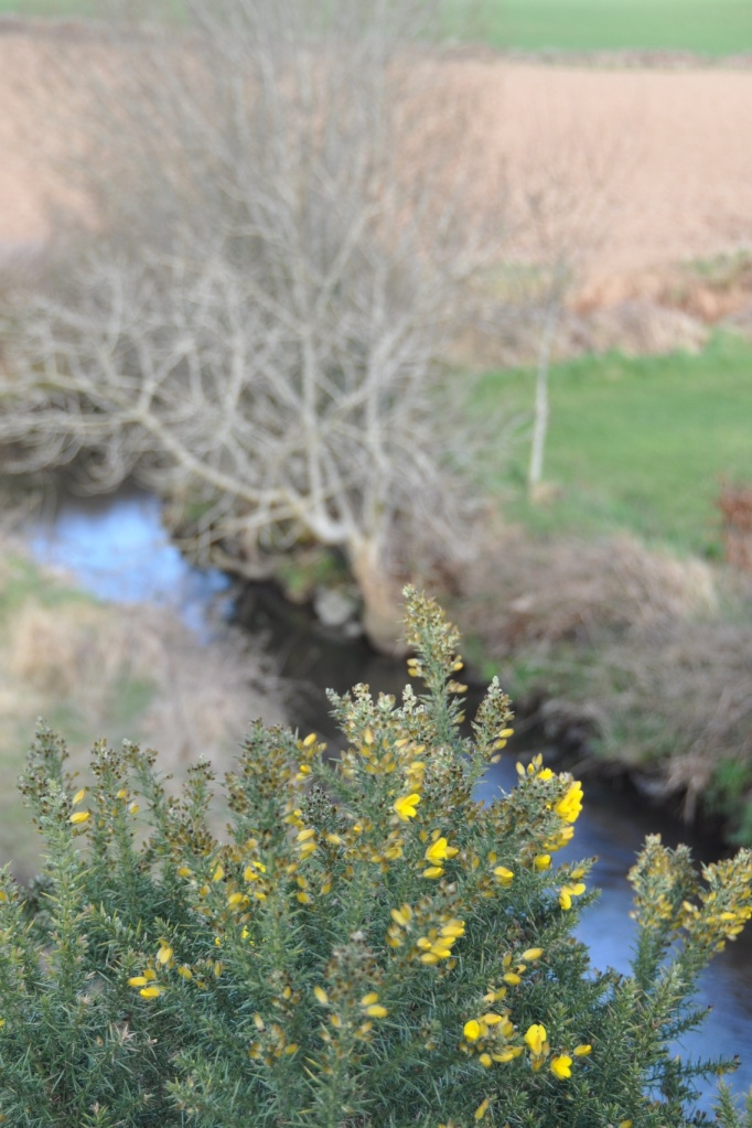 greenway gorse river 2