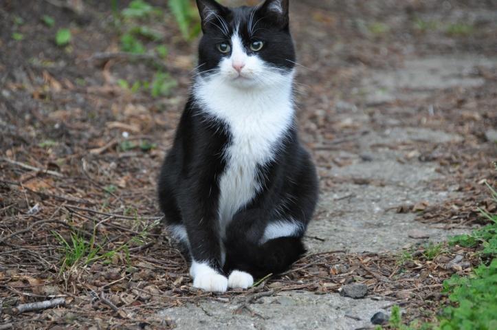 Cat after vet