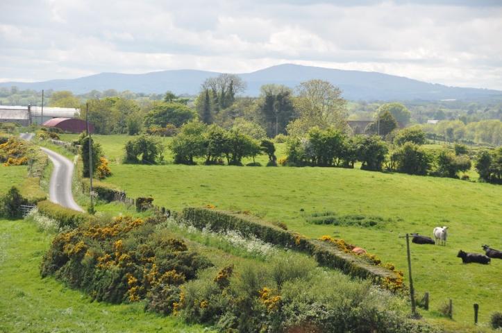 Ballygeegan landscape 2