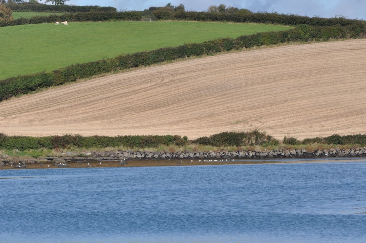 Ballymorran fields and water