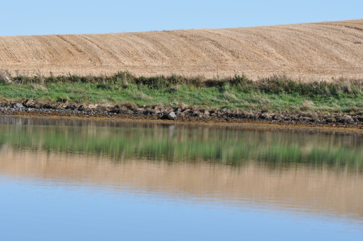 Ballymorran harvest reflection