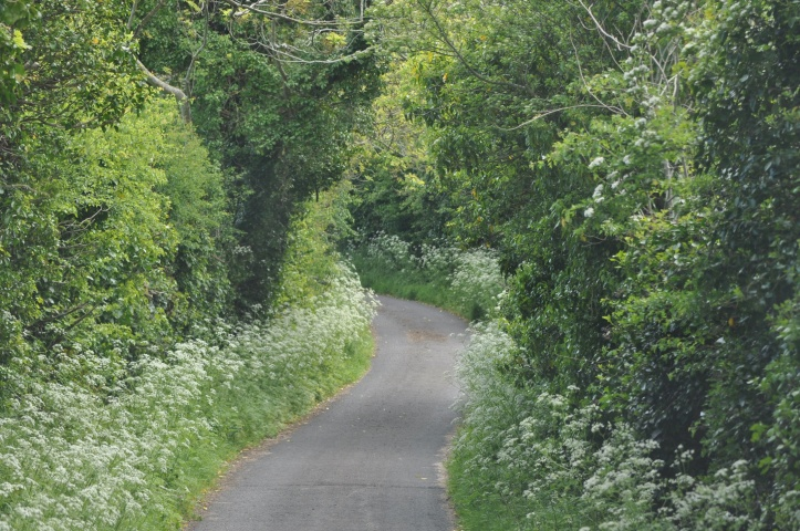 Ringdufferin narrow road