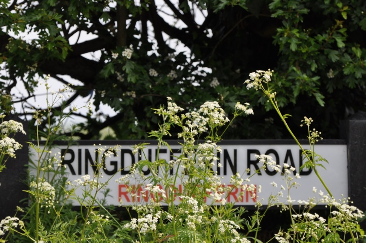 Ringdufferin Road sign