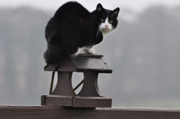cat on birdhouse