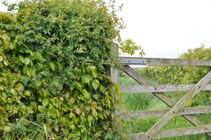 Tullynagardy farm gate