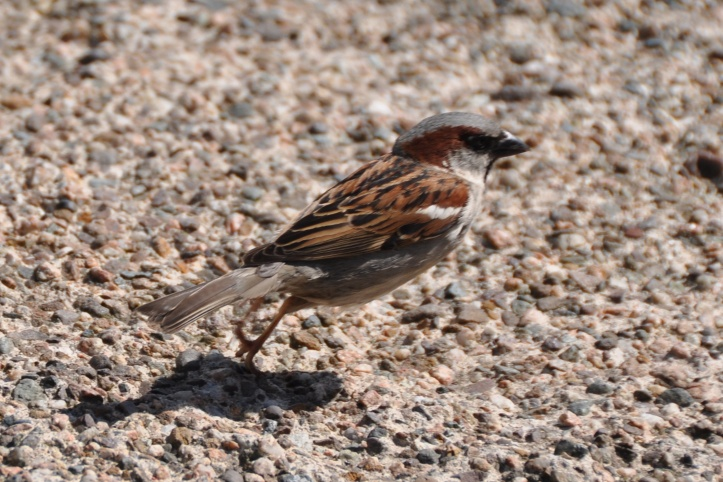 sparrow at eden pottery (1)