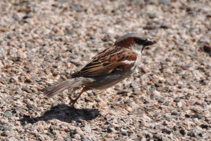 sparrow at eden pottery (1)