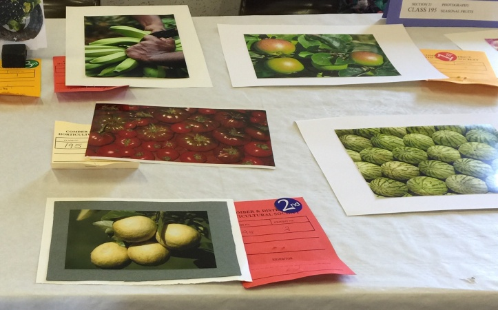 Comber show photograph table