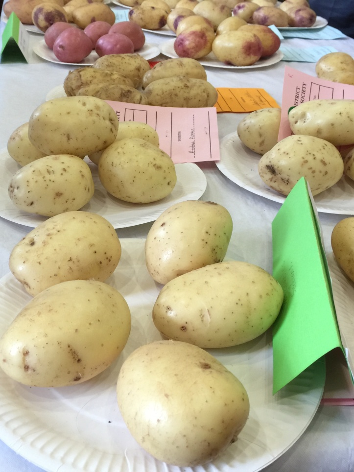 Comber show potato table