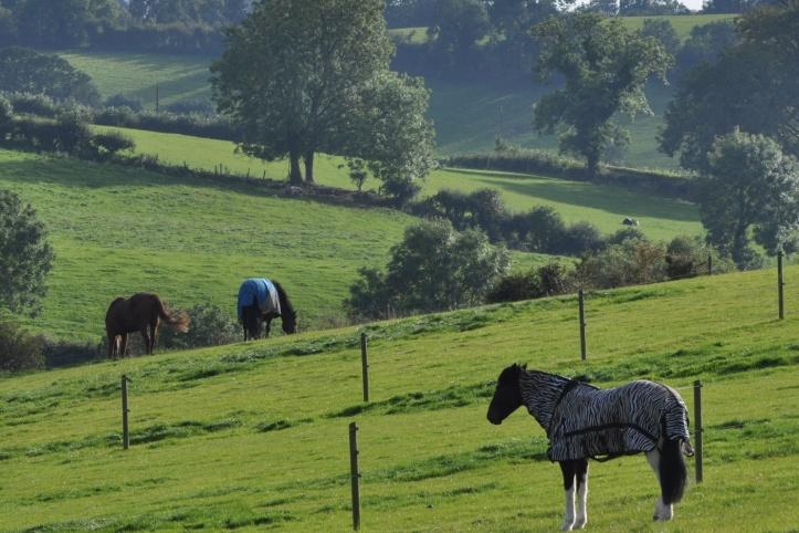 Kirkland horses