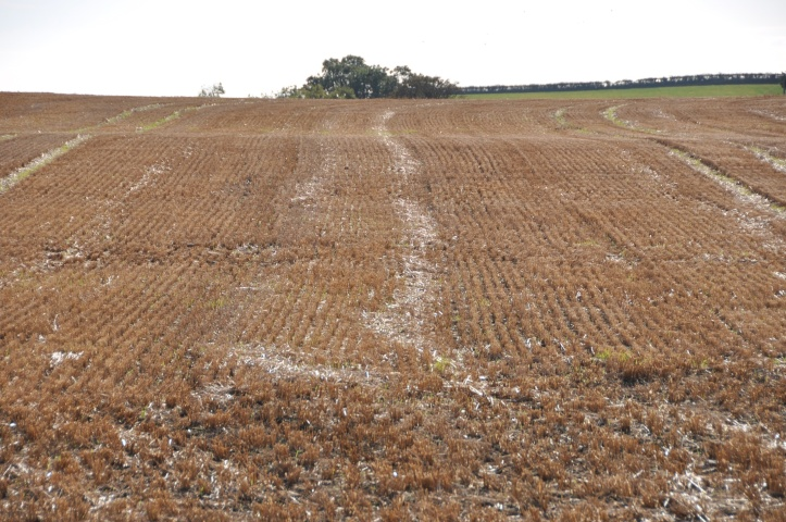 Ballyvester harvested field 2