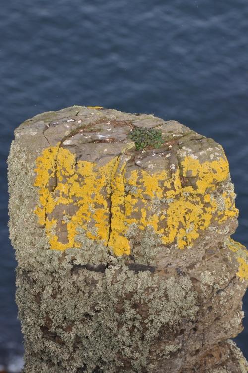 causeway coast pillar