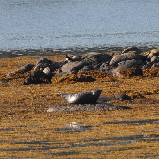 Sketrick seal