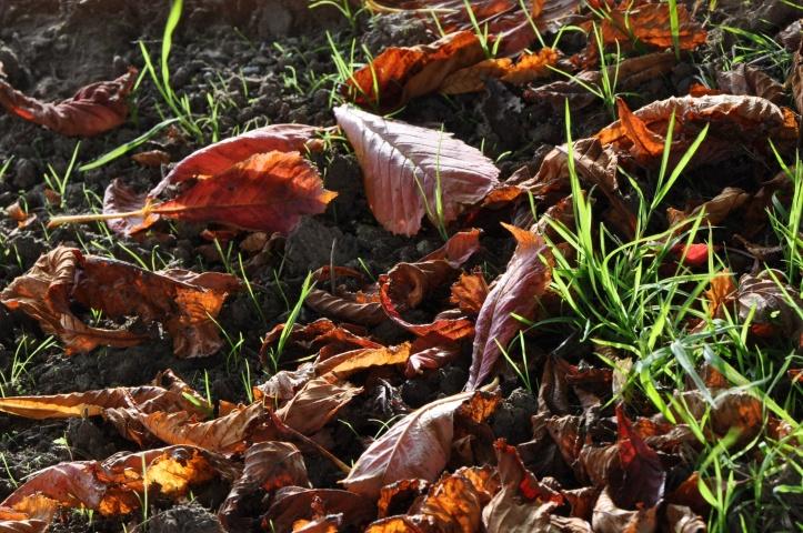 autumn leaves Ballynichol