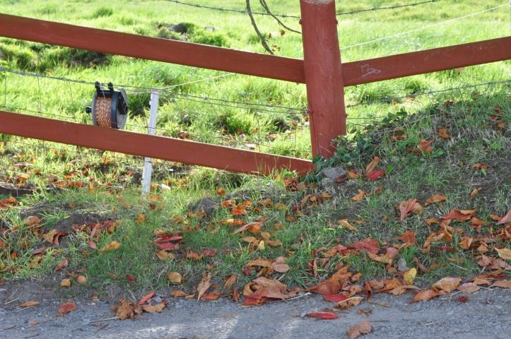 Ballynichol red fence