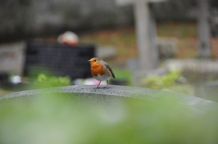 Gravestone robin Killysuggan