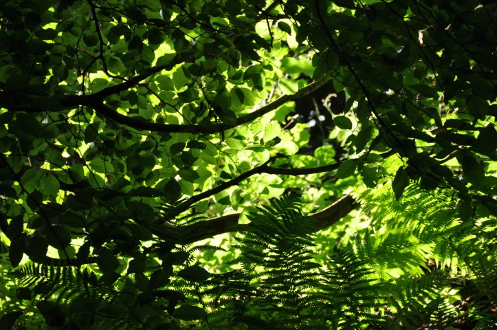 Sun through trees near Helen's Tower