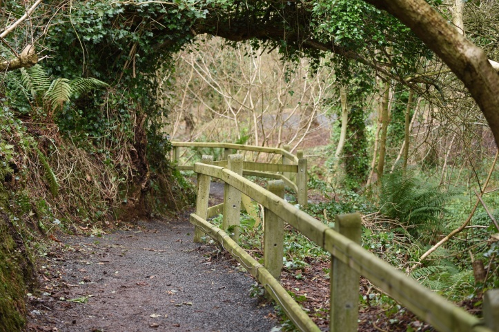 Stricklands Glen path in Ballyvarnet