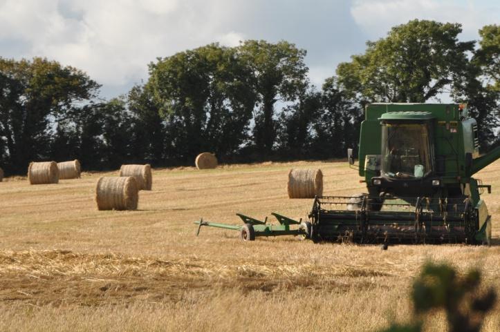 Ballybunden harvest (1)