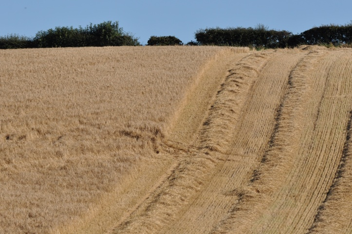 Ballymartin harvest