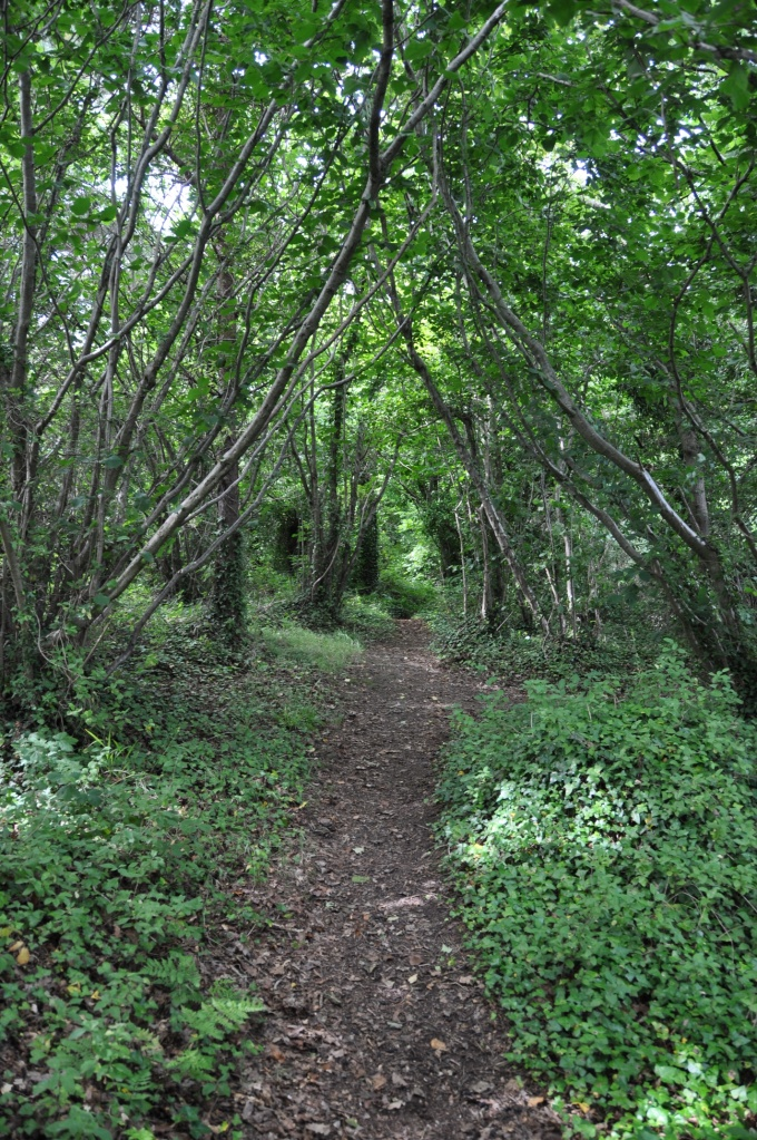 Reagh Island woodland path