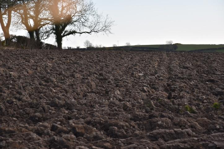 Carrickmannan ploughed field