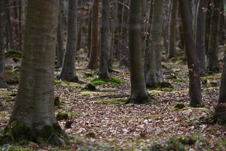 Creighton's Wood