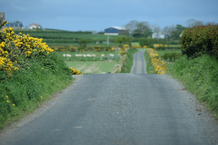 Bairdstown road in Whitechurch