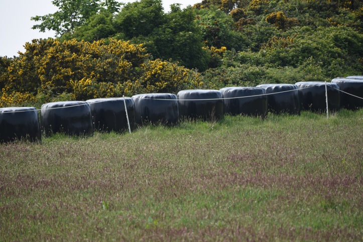 Gregstown silage bales
