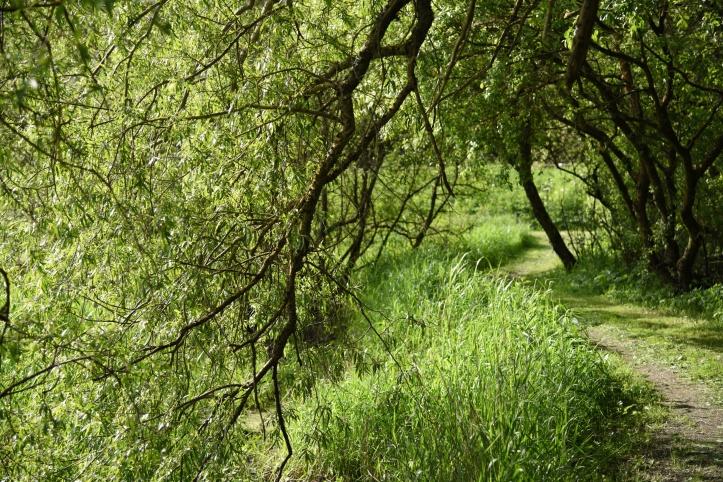 Quoile riverside path