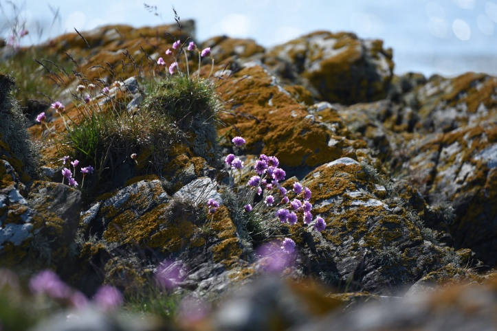 Ballymacormick clover rocks