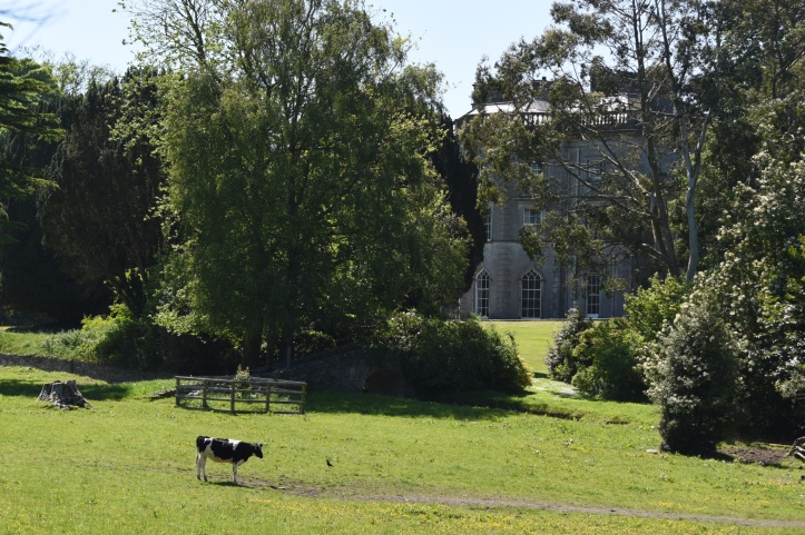 Rosemount House from Abbey with cow