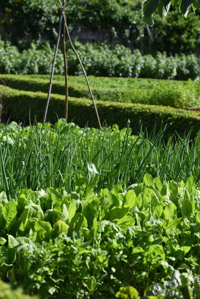 Rosemount kitchen garden