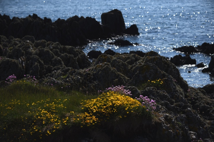 Kearney wildflowers and rocks