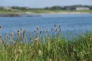 Milliin Bay grass