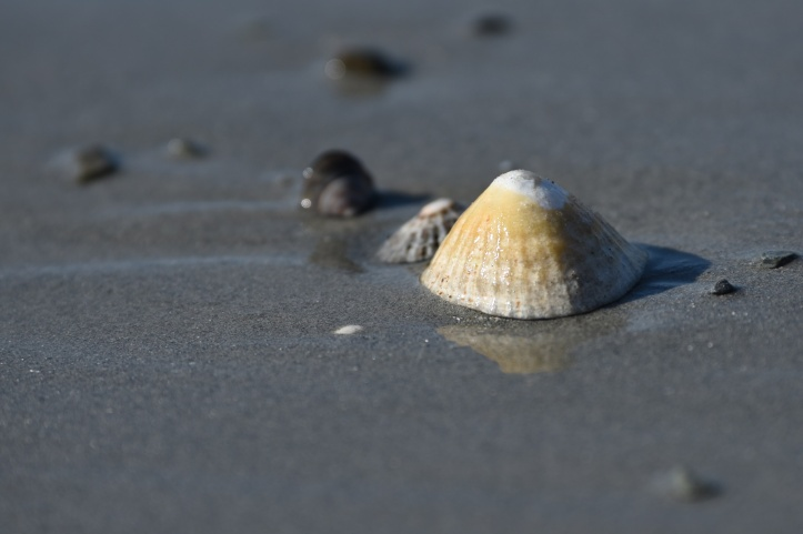 Milliin Bay shell in Keentagh