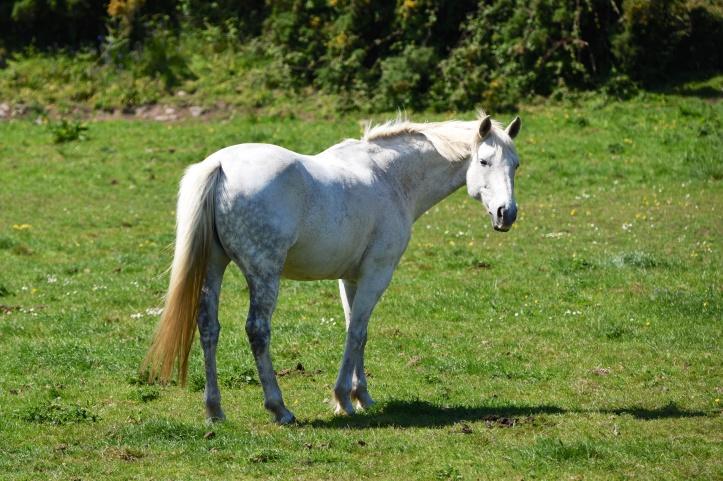 Ratallagh horse