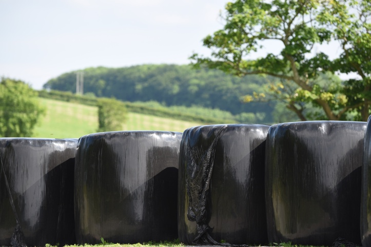 Tullyveery silage bales