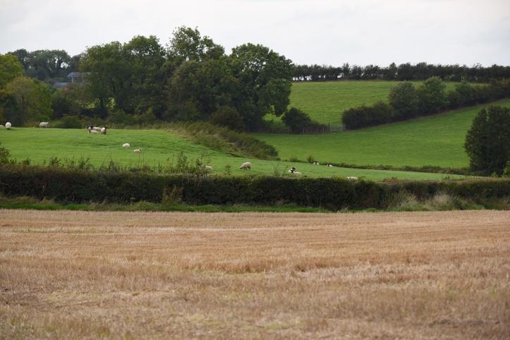 lisbane-fields