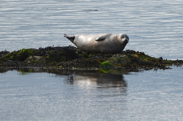 portaferry-seal